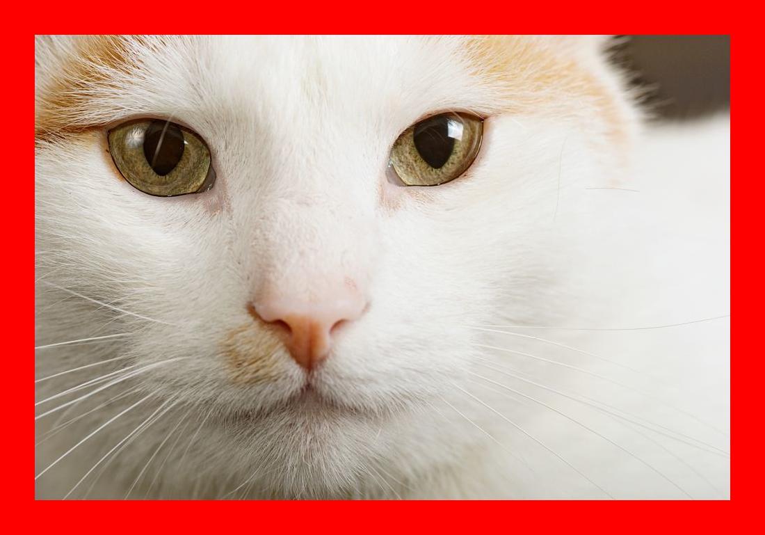 The Turkish Van Cat - Cat Breeds Encyclopedia